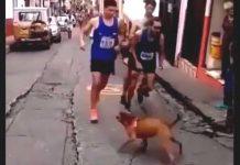 Atleta patea perro en San Silvestre de Colombia